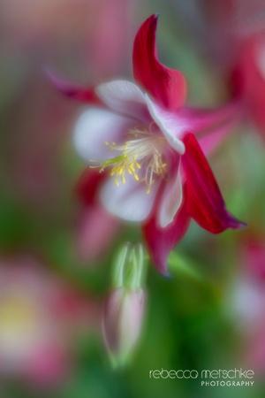 Bloom Cycles