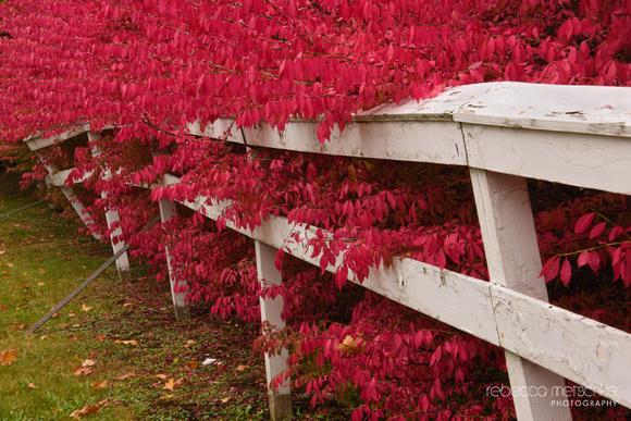 Tug of War Autumn Maine