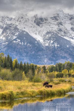 autumn pastoral Grand Teton National Park