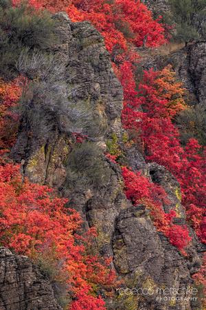 Cascading Crimson
